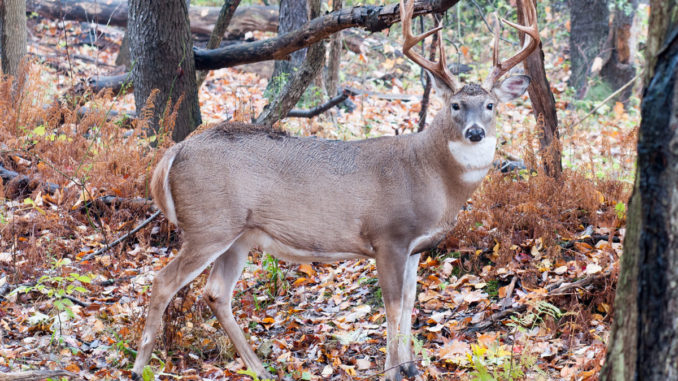 The 2017 18 Mississippi Outdoor Digest Included Some Incorrect Information Regarding Regulations And Limits For Upcoming Deer Season