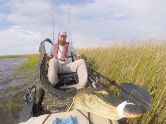 Daniel Wilson, of Mobile, Alabama, shows off the 9-foot alligator he battled and eventually harvested from his Hobie PA 14 in Bayou Heron south of Pascagoula on Sept. 1.