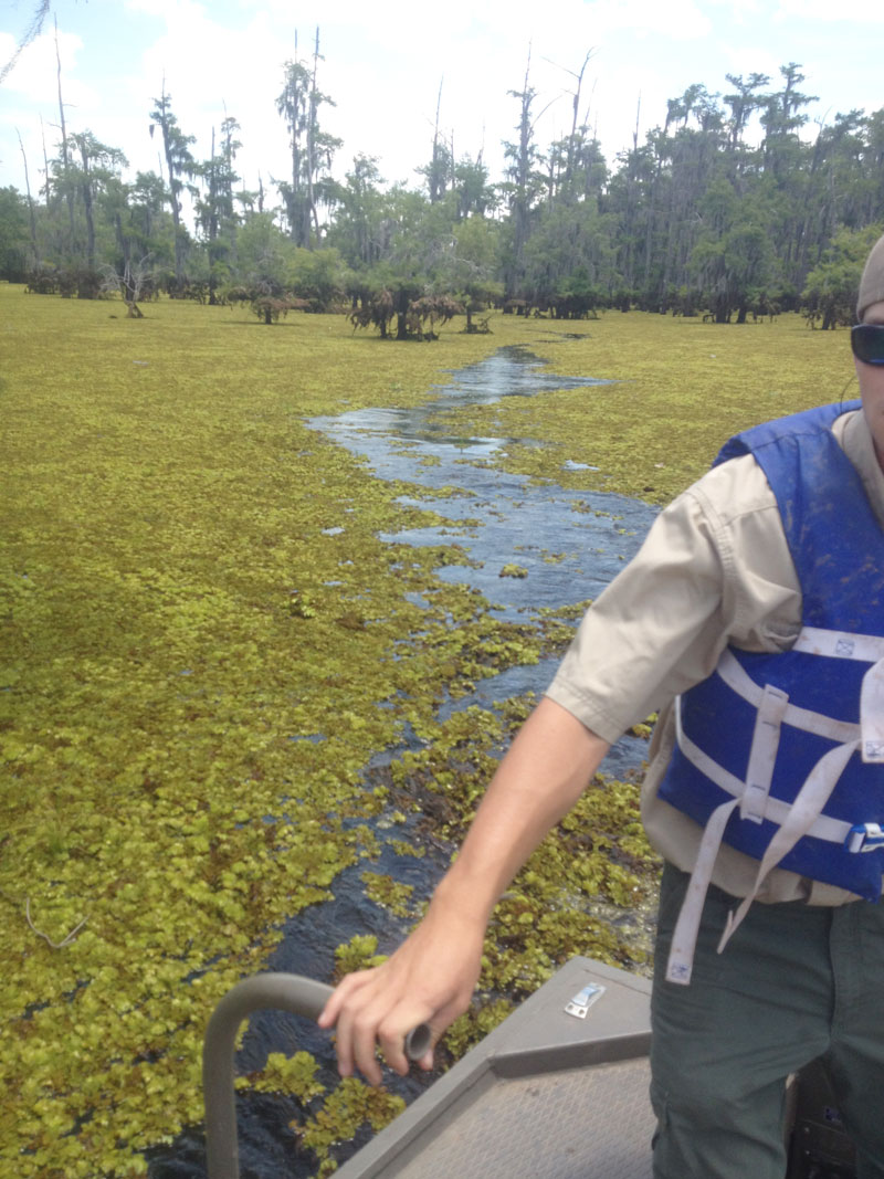 Ross Barnett's Pelahatchie Bay was closed to all boating last Nov. 1 because of an invasion of giant salvinia; it has since been found in other lakes.