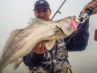 Jerkbaits will trigger strikes from speckled trout year-round, but they're especially productive in cold weather.